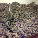 All the children's shoes they found...