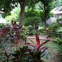 The amazing tropical garden outside my bungalow at the Auberge