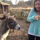 Donkey's about to eat me...
