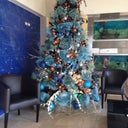 Christmas tree at CIPLA