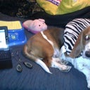 My BBL BFFs! Travel pillow, Ipad, Stepstool, tongs, slippers & my dog.